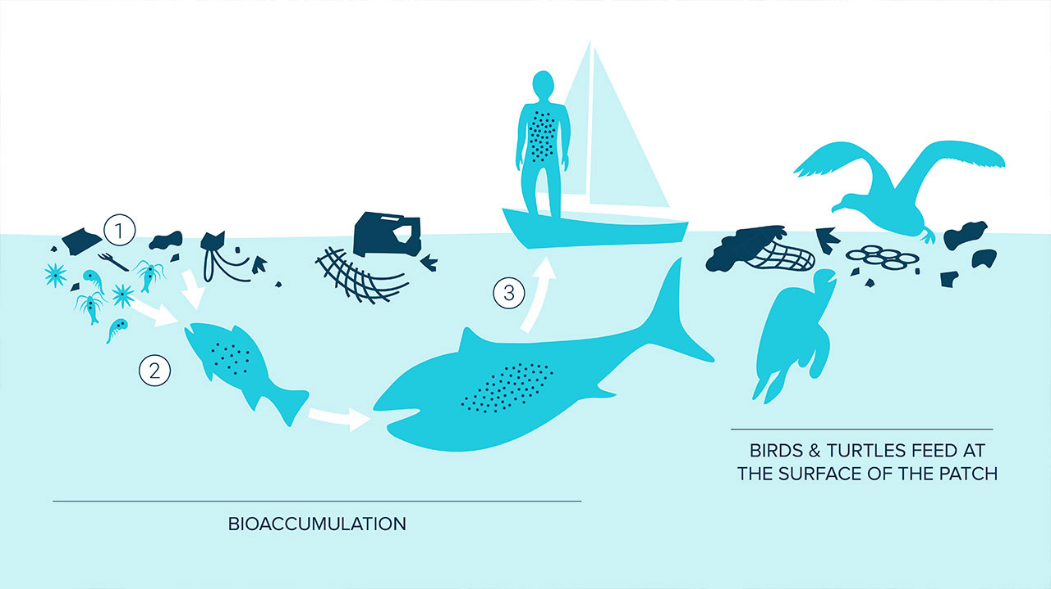 Plastic Food Web