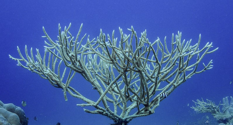 Becoming a Coral Champion with Rescue a Reef